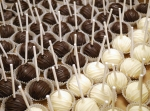 Cheese Cake Pops 2
